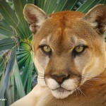 Top Florida Zoos