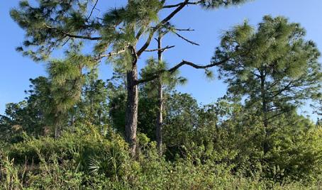wetlands southwest florida